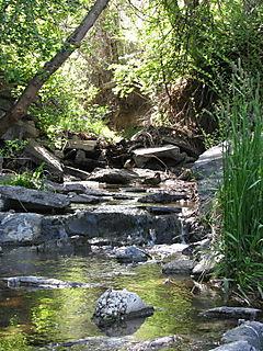 Creek and tress xsmall