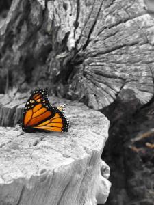 Butterfly redux