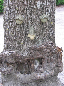 Tree_face_reduced